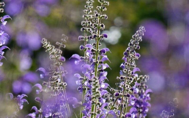 Plantas espirituales