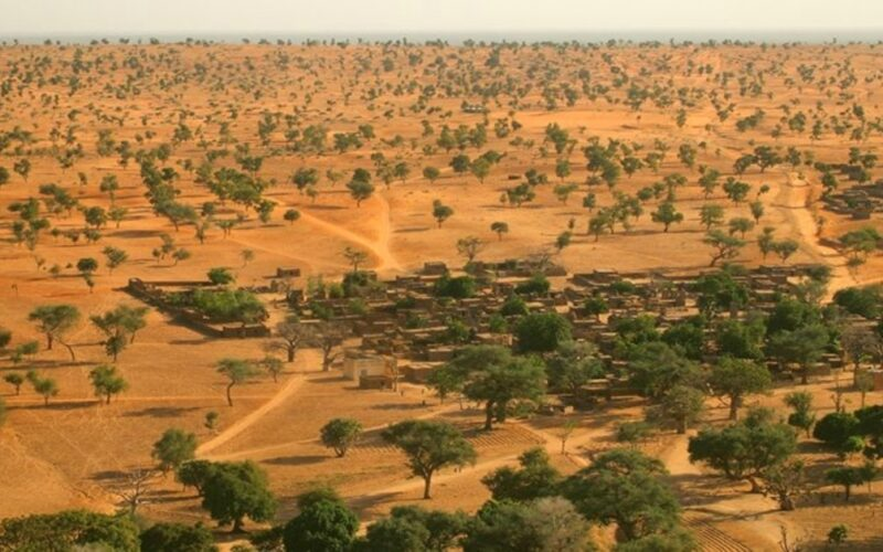 árboles en el desierto de Sahara