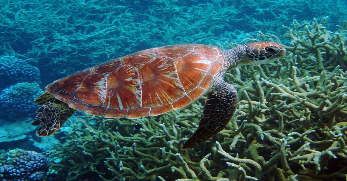 rebuilding de la vida marina